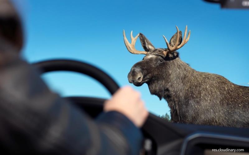 Водителям надо быть внимательными!