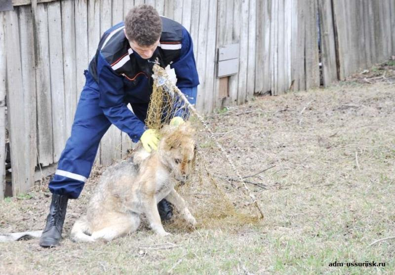 В мае планируется отлов безнадзорных собак