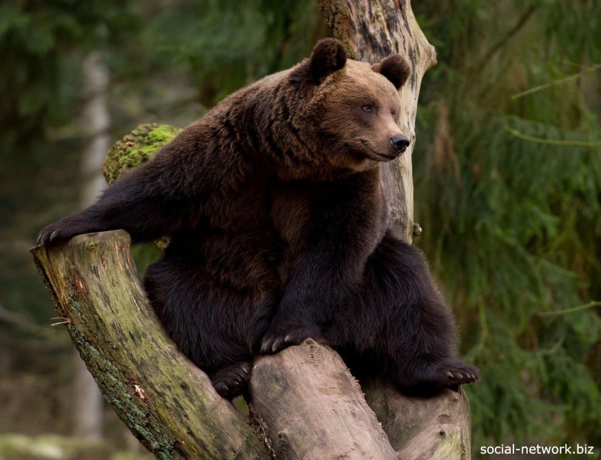 Учет медведя и водоплавающей дичи