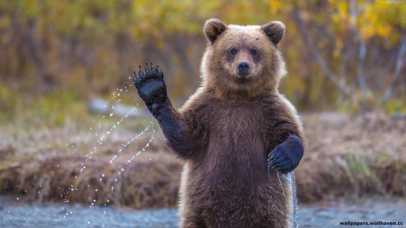 Осторожно: медведи