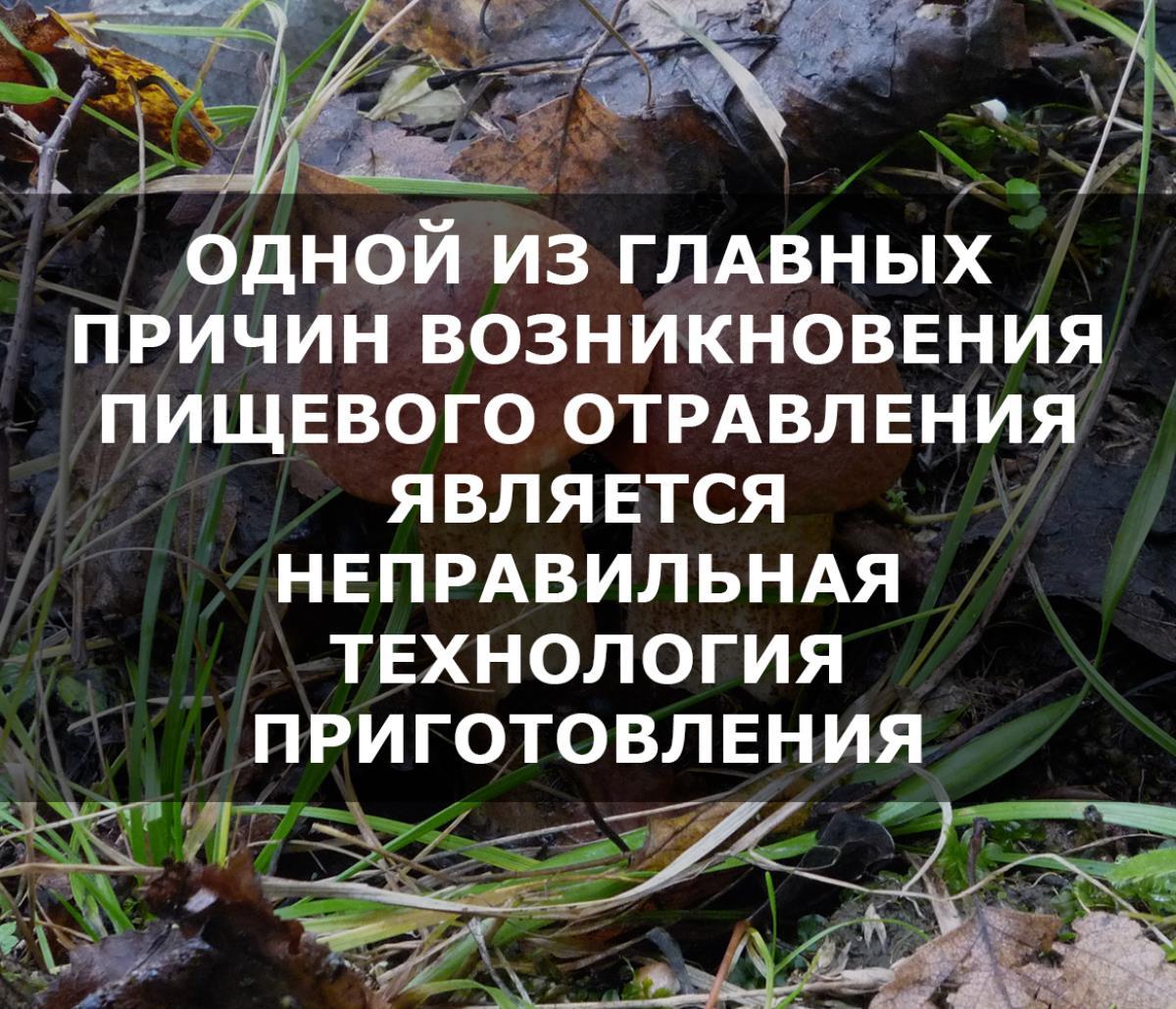 Чтобы не отравиться грибами