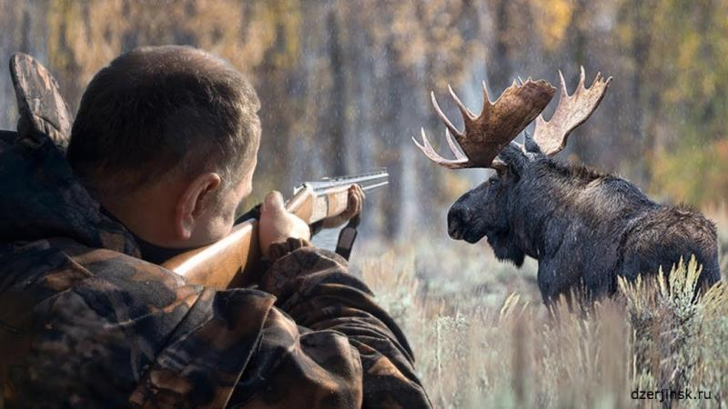 Открывается охота на лося