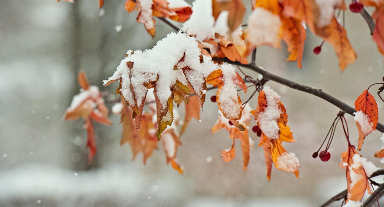 Ноябрь будет теплее нормы