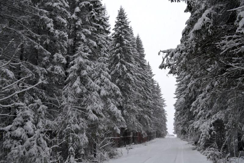 Нас ждут снежные выходные