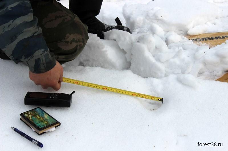 Зимние маршрутные учеты охотничьих животных