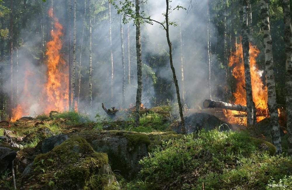По вине человека горят леса