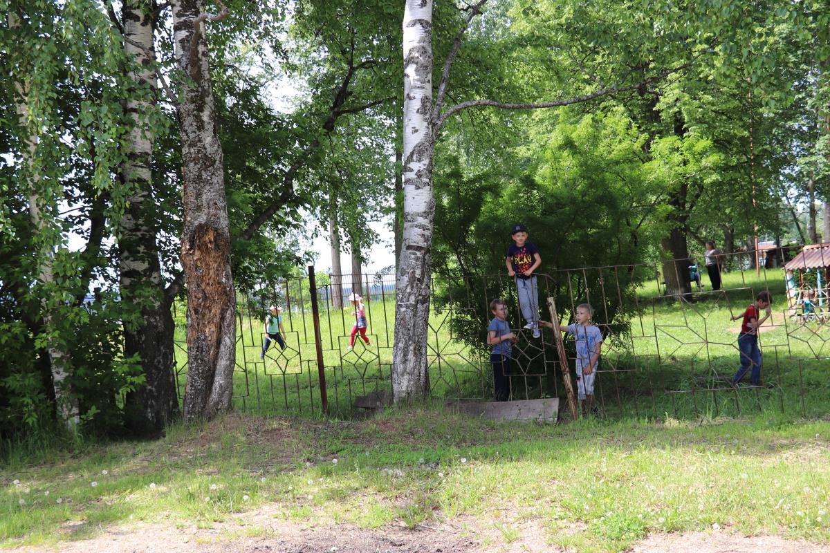 Ветхие деревья – источник опасности