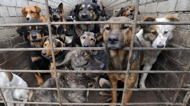 Держите собак на привязи
