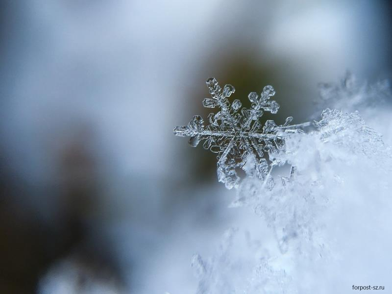 Снег и холодная неделя