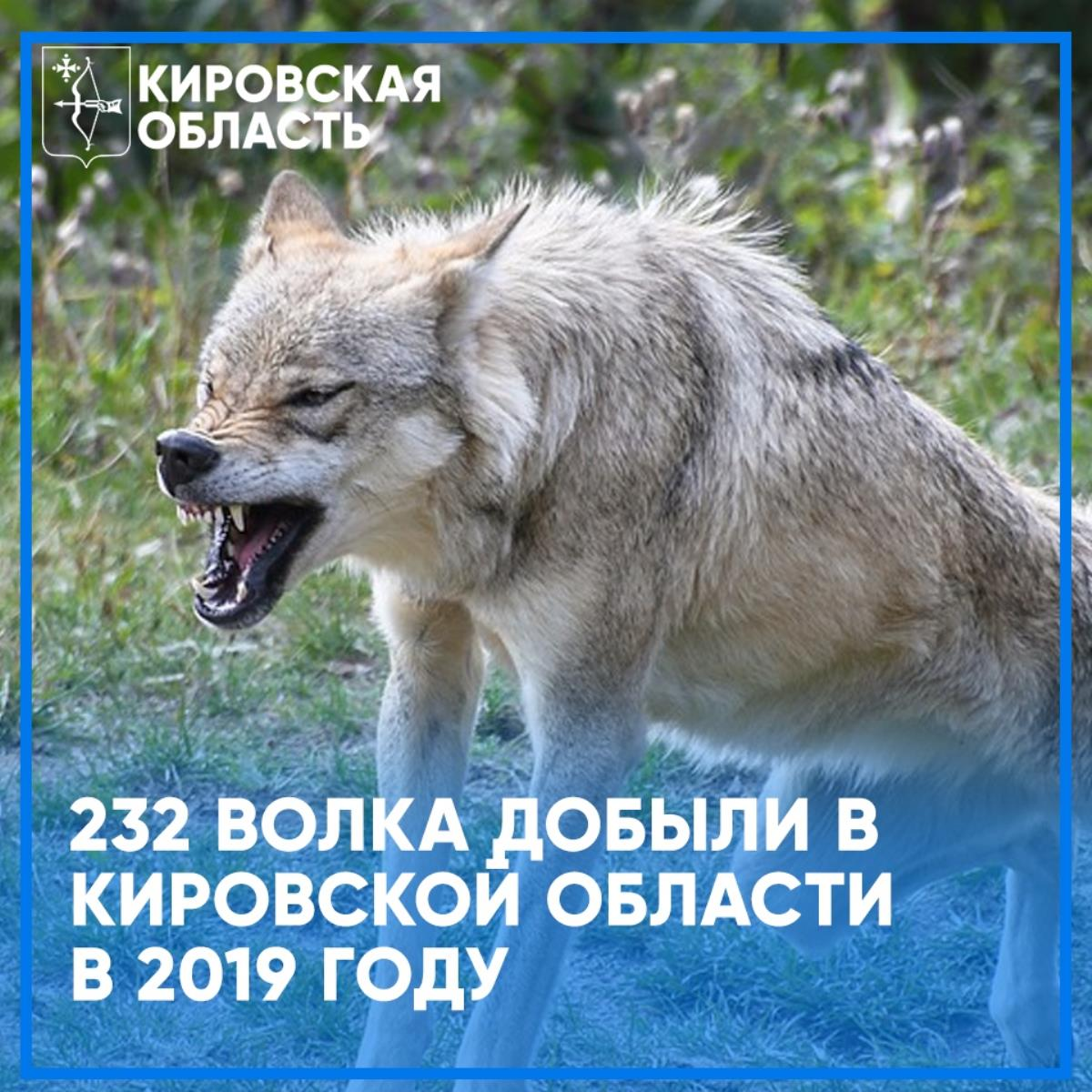 В области добыто 232 волка
