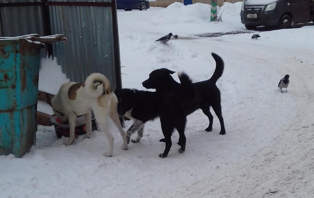 Опасных собак нельзя выгуливать без намордника