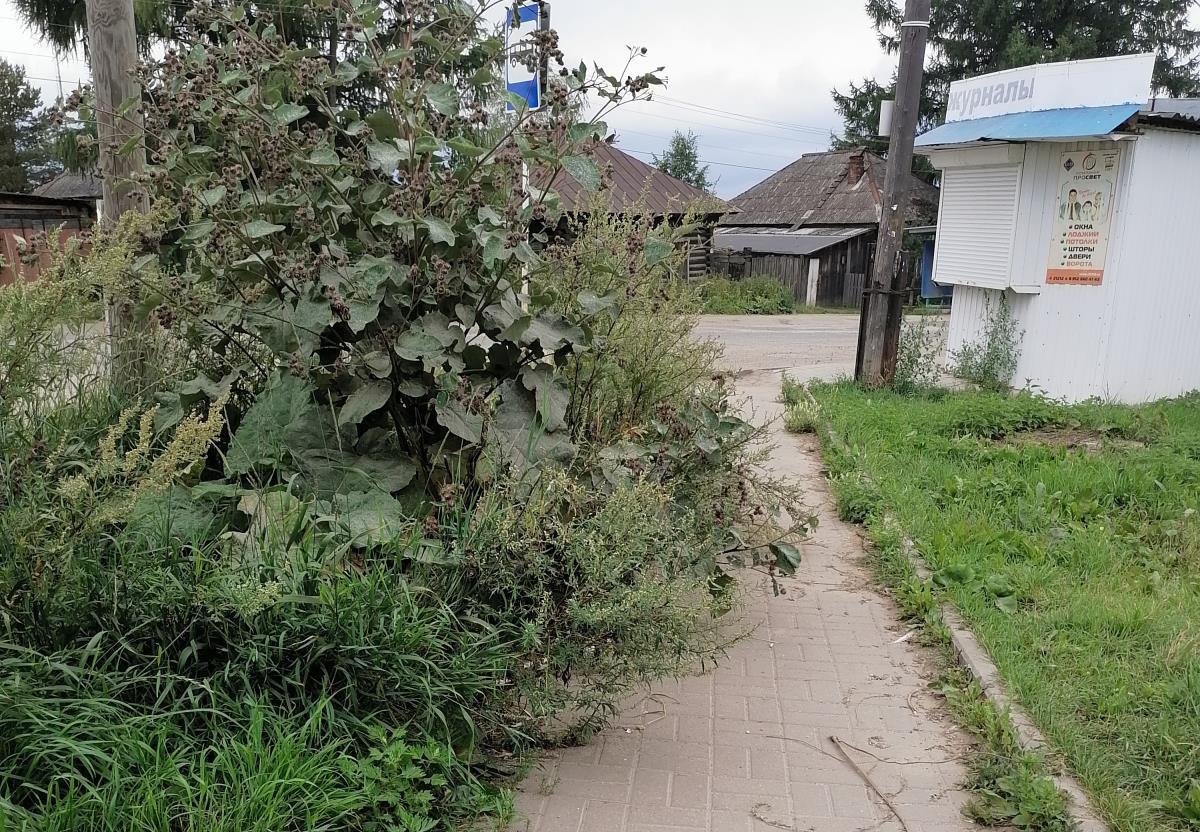 Трава мешает пешеходам