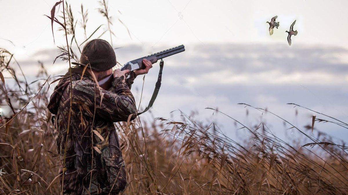 Сезон охоты в разгаре