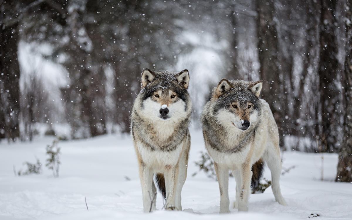 Начался зимний подсчет диких животных