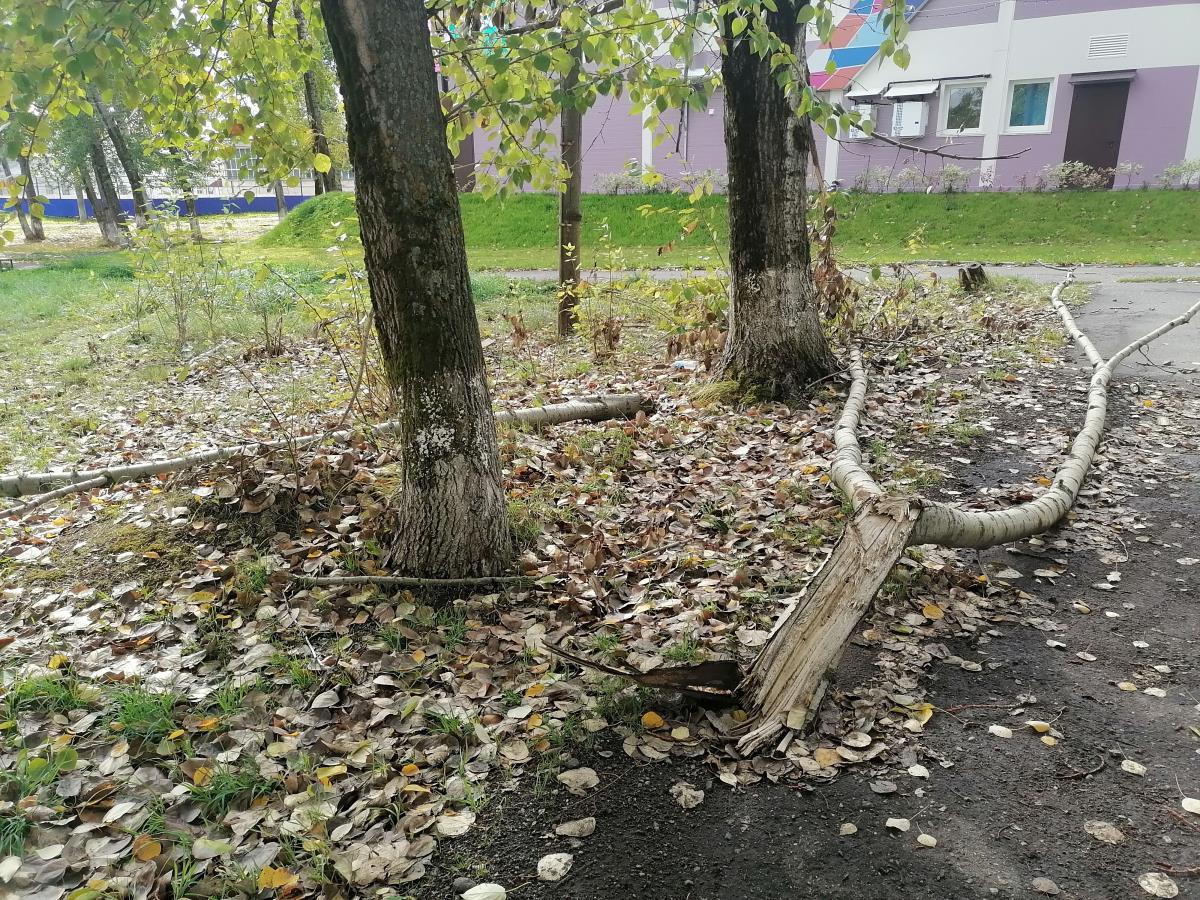 Парк ждет благоустройства