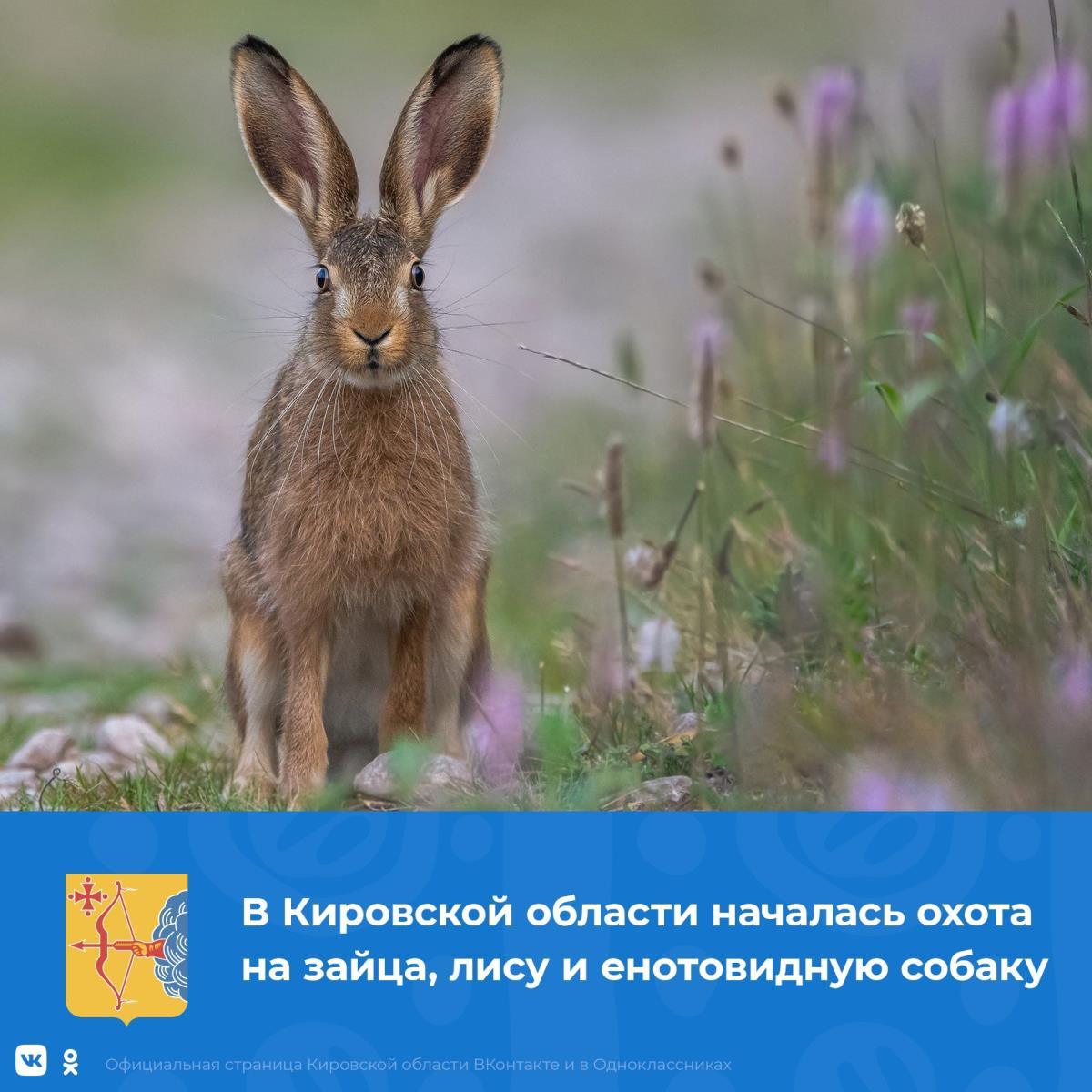 Началась охота на зайца, лису и енотовидную собаку